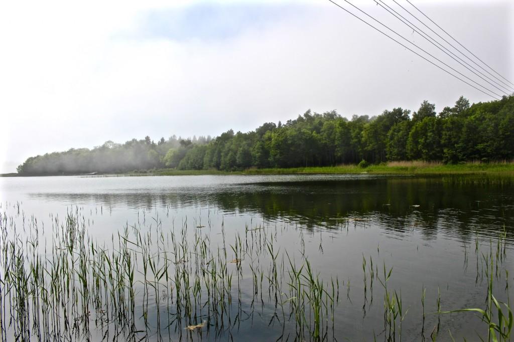 1506-grisslehamn - 1 (4)